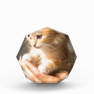 Sweet Kitten in good Hand Award