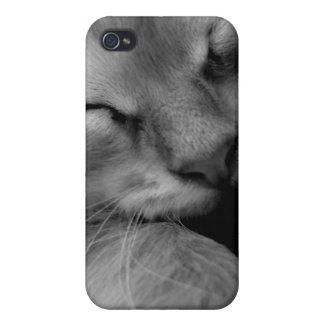 Sweet Kitten iPhone 4 Covers
