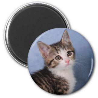 Sweet Kitten 2 Inch Round Magnet