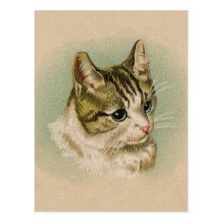 Sweet Kitten Postcard