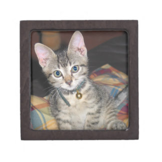 Sweet Kitten Premium Jewelry Box