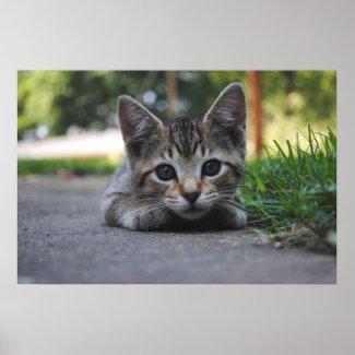 Sweet Kitten Print print