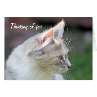 sweet kitten thinking of you card