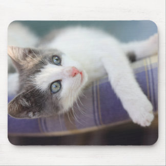 Sweet Kitty In Plaid Bed Mouse Pad