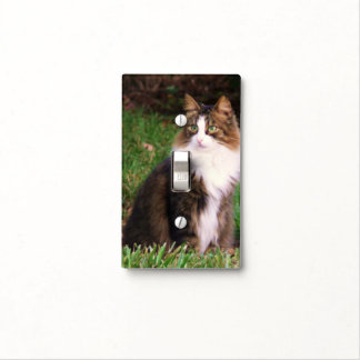 Sweet kitty, light switch. light switch cover