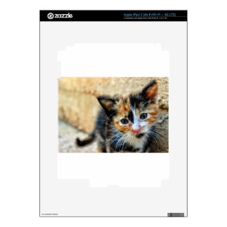 Sweet Kitty looking at YOU iPad 3 Decals
