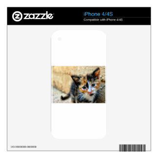 Sweet Kitty looking at YOU iPhone 4 Skin