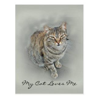 (Sweet Kitty Postcard