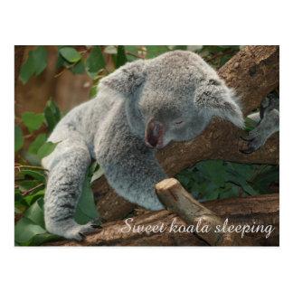 Sweet koala bear sleeping postcard
