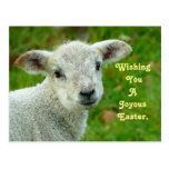 Sweet Lamb Postcard
