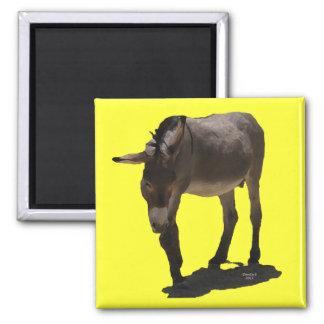 Sweet Little Burro - Donkey 2 Inch Square Magnet
