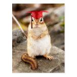 Sweet Little Chipmunk Graduate Postcard