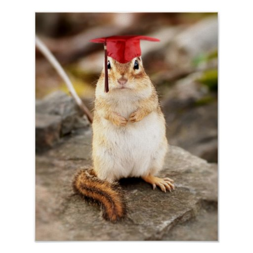Sweet little chipmunk graduate poster