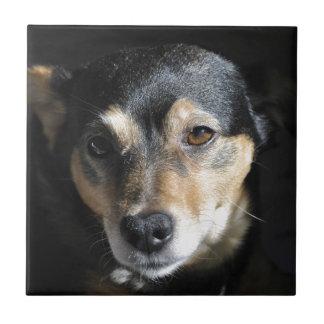 Sweet Little Dog Posing for the Camera Tiles