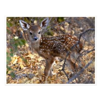 Sweet Little Fawn Deer in the Woods Photo Postcard