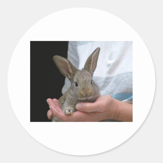 sweet little rabbit classic round sticker