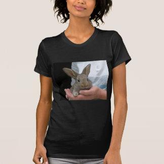 sweet little rabbit shirt