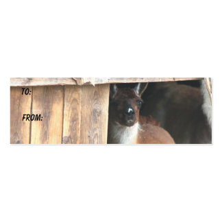 Sweet Llama Farm Animal Photo Gift Tag Business Card Template