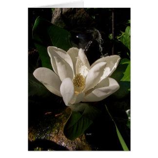 Sweet Magnolia Blossom Card