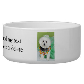 Sweet Maltese in Halloween Colors Bowl
