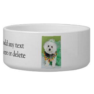 Sweet Maltese in Halloween Colors Bowl