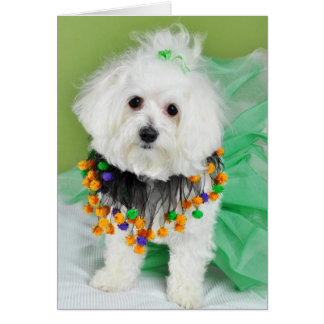 Sweet Maltese in Halloween Colors Card