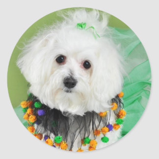 Sweet Maltese in Halloween Colors Classic Round Sticker