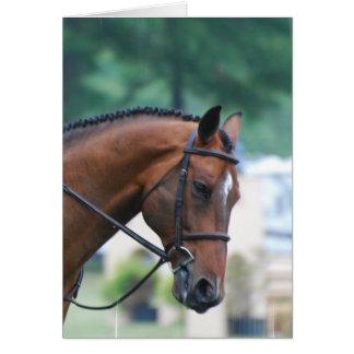 Sweet Morgan Horse Greeting Cards