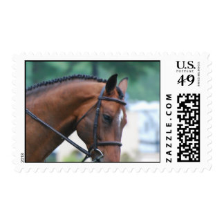 Sweet Morgan Horse Postage Stamps