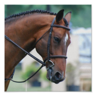 Sweet Morgan Horse Poster