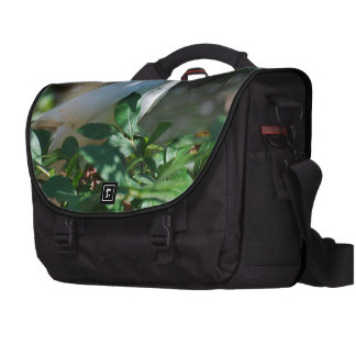 Sweet Mourning Dove Commuter Bags