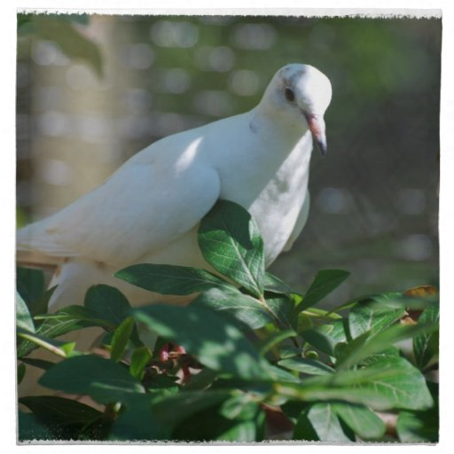 Sweet Mourning Dove Printed Napkins