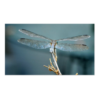 Sweet note (dragonfly) business card
