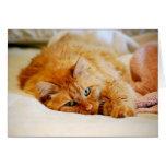 Sweet Orange Maine Coon Cat Card