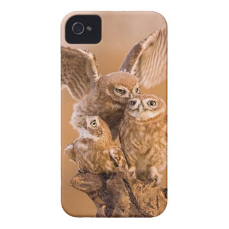 Sweet Owl Family iPhone 4 Case-Mate Cases
