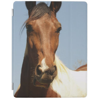 Sweet Paint Horse iPad Cover