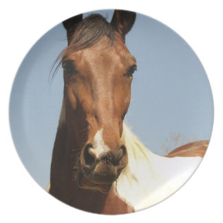 Sweet Paint Horse Party Plates