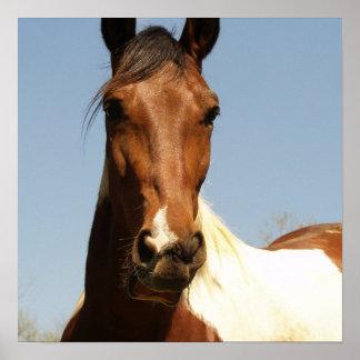 Sweet Paint Horse Print