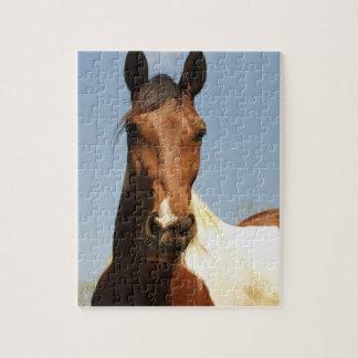 Sweet Paint Horse Puzzles