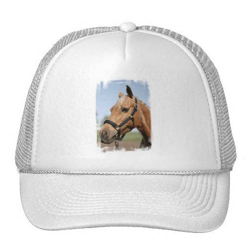 Sweet Palomino Baseball Hat