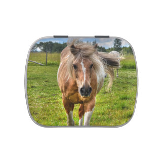 Sweet Palomino Paint Horse Horse Equine Photo Candy Tin