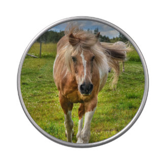 Sweet Palomino Paint Horse Horse Equine Photo Jelly Belly Candy Tins