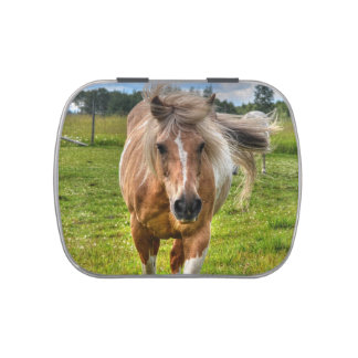 Sweet Palomino Paint Horse Horse Equine Photo Jelly Belly Tins