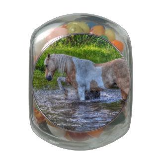 Sweet Palomino Paint Horse & Water Equine Photo Glass Jar