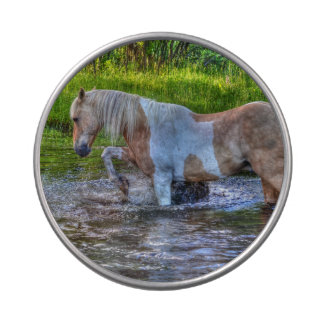 Sweet Palomino Paint Horse & Water Equine Photo Jelly Belly Tin