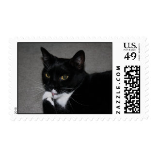 Sweet Paws Postage Stamp