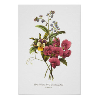 Sweet Pea and Viola Posters