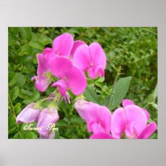 Sweet Pea...Field Flower Print