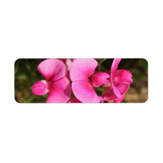 sweet pea flower macro label