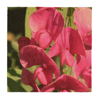 Sweet Pea Flowers Coaster